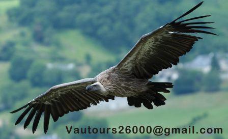 6-vautours26000.jpg